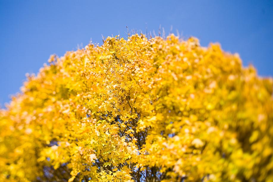 autumn_ts_02