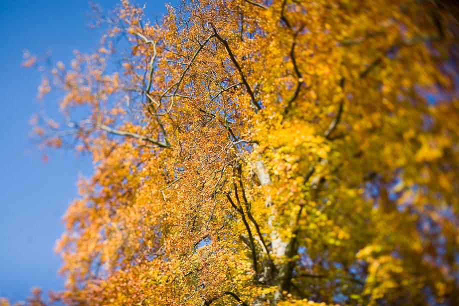 autumn_ts_03