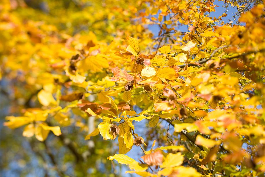 autumn_ts_04