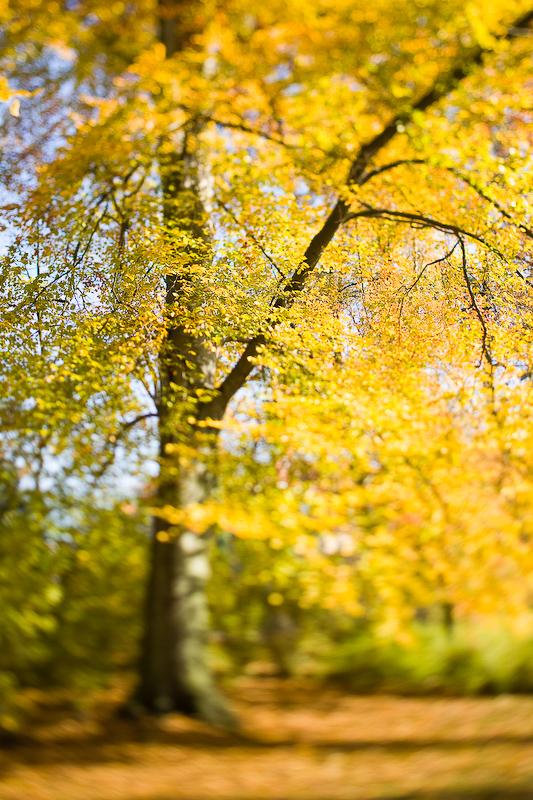 autumn_ts_05