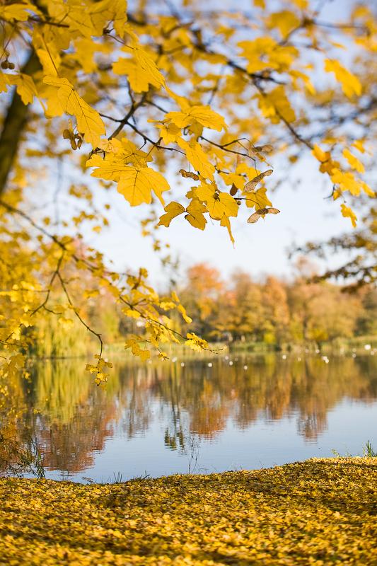 autumn_ts_08