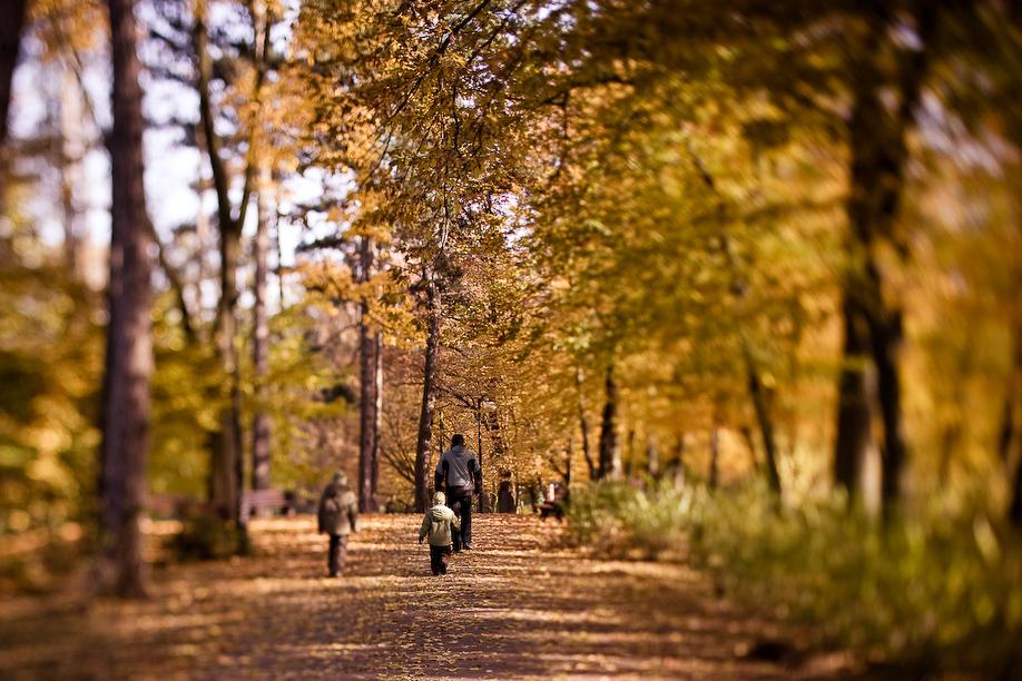 autumn_ts_10